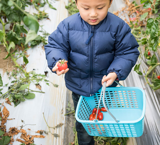 Little boy with tomatoes in basket